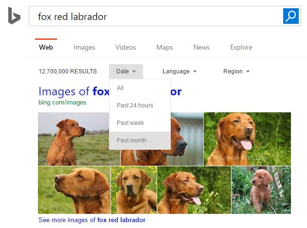 Searchbydate